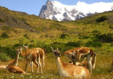 IMG 0082 370x260 Patagonia dove la terra incontra il cielo