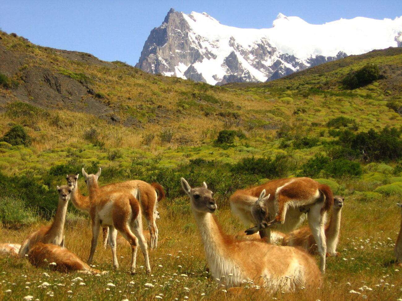IMG 0082 scaled Viaggio in PATAGONIA Grand Tour completo tra Argentina e Cile sino a Ushuaia