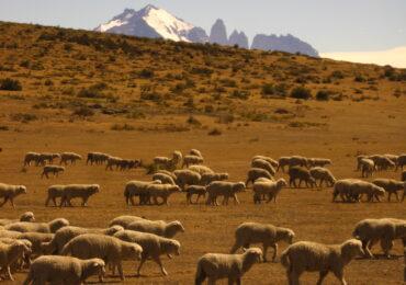 IMG 0607 370x260 Patagonia dove la terra incontra il cielo