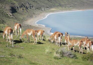 IMG 4718 370x260 Patagonia dove la terra incontra il cielo