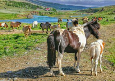 IMG 20190630 163651 01 370x260 Viaggio in Islanda tra ghiaccio e fuoco aurore boreali e leggende