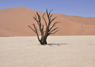 Namibia dune sossusvlei alberi pietrificati naturaviaggi 370x260 Namibia Grand Tour nell 8217 Africa mistica