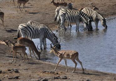 Namibia safari naturaviaggi 370x260 Namibia Grand Tour nell 8217 Africa mistica
