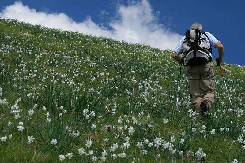 Fioritura delle giunchiglie Proposte escursioni giornaliere in Toscana